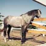 Portrait of a horse, Vintage retro style. — Φωτογραφία Αρχείου
