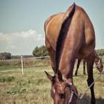 Portrait of a horse, Vintage retro style. — Stock Photo