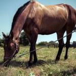 Portrait of a horse, Vintage retro style. — Stock Photo #35692843
