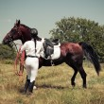 Rider on horse, vintage retro style — Stock Photo