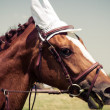 Portrait of a horse, Vintage retro style. — Stock Photo #35692891