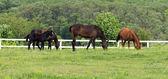 Horses on ranch — Stock Photo