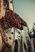 Lizard in Park Guell in Barcelona, Spain. — Stock Photo