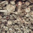 Pile of wood log — Stock Photo