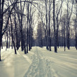 Snow scene winter — Stock Photo