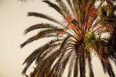 Palm parrot — Stock Photo