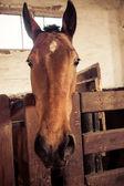 Horse portrait - farm animal pasture — Stock Photo