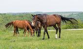 Horse on pasture — Stock Photo