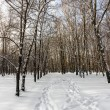 Winter forest — Stock Photo #38208323