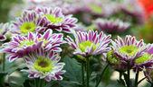 цветок в горшок цветочный — Стоковое фото