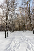 Winter forest — Photo