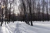 Zimní Les sníh — Stock fotografie
