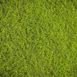 Grass texture — Stock Photo #38631391