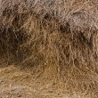 Stack hay straw — Stock Photo