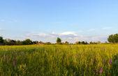 Paesaggio con campo — Foto Stock