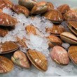 Stock Photo: Shells food sea