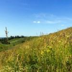 Green hills — Stock Photo #39691753