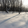 Landscape winter — Stockfoto