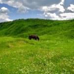 Pasture horse — Stock Photo