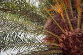 Palm léto — Stock fotografie