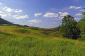 Meadow green grass — Stok fotoğraf