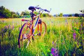Fahrrad auf wiese — Stockfoto