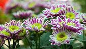 Flower in pot floral — ストック写真