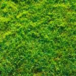 Fresh spring geen grass — Stock Photo #45079569
