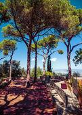 Conifers on blue sky — Стоковое фото