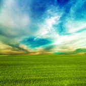 Grass green field and blue sky — Stok fotoğraf