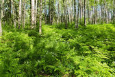 Green forest summer — Stock Photo