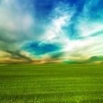 Grass green landscape — Stock Photo #49238813