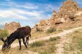 Cave monastery donkey — Stockfoto