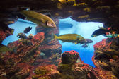 View fishes in aquarium — Stock Photo