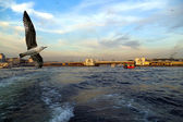 Istanbul sea front view, Bosporus, Turkey. — Stock Photo