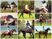 Collage of Rider on horse — Stock Photo