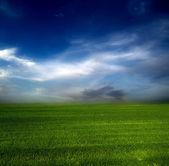 Green field blue sky — Stock Photo