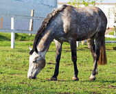 Horse — Stockfoto
