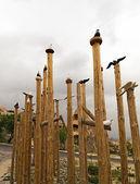 卡帕多西亚的鸽子 — 图库照片