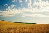 Landscape Wheat Field and Clouds — Stockfoto