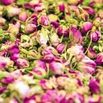 Dry roses petal — Stock Photo #51073783