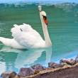 Stock Photo: Beautiful White Swan