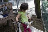 Petting Zoo. — Stock Photo