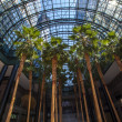 World Financial Center Winter Garden Atrium - Manhattan, New Yor — Stock Photo