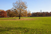 Center Park - Sheeps Medow in fall — Stock Photo