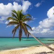 Palm tree on tropical beach — Stock Photo