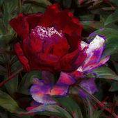 艺术花卉色彩鲜艳柔和背景 — 图库照片