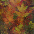 Art leaves autumn background, card — Stock Photo #29598399