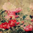 art floral vintage colorful background — Stock Photo