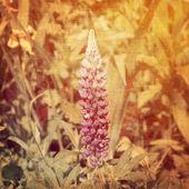 Art floral vintage background — Photo